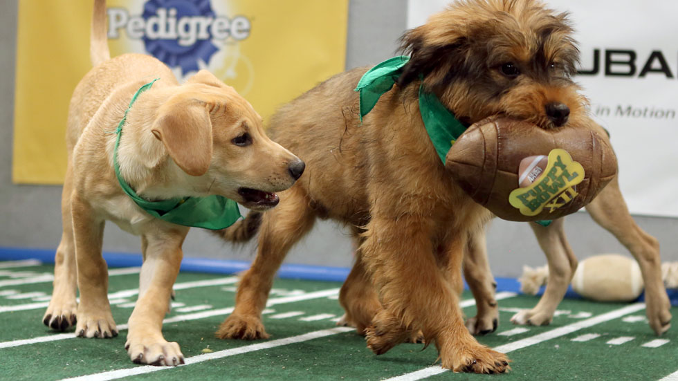 puppy-bowl-2016-starting-line-up-01