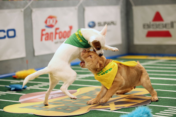 puppy-bowl-2016-starting-line-up-03