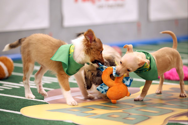 puppy-bowl-2016-starting-line-up-06