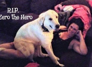 Hero dog dies shooting saves family texas