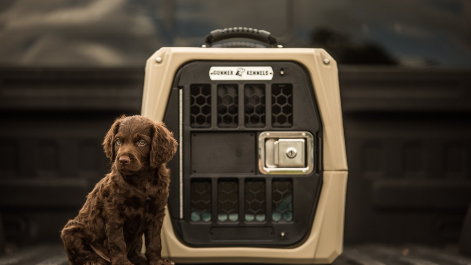The Kennel That Aims to Make Road Trips Safer for Your Dog
