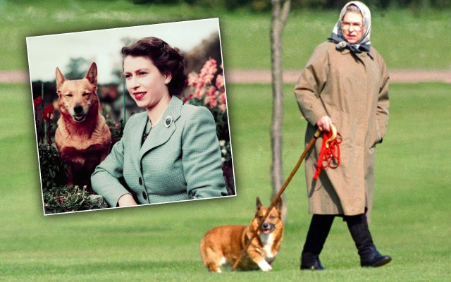 queen elizabeth death of corgi dogs
